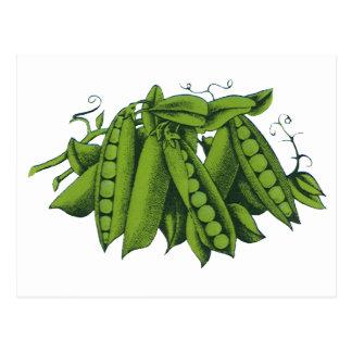 Vintage Healthy Food Vegetables Sugar Snap Peas Postcard