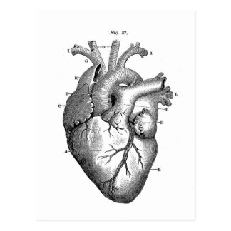 Vintage Heart Anatomy | Customizable Postcard