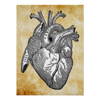 vintage heart anatomy poster