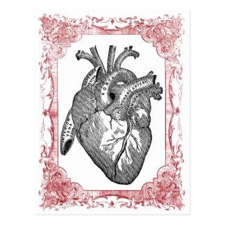 Vintage Heart Anatomy Valentine Postcard