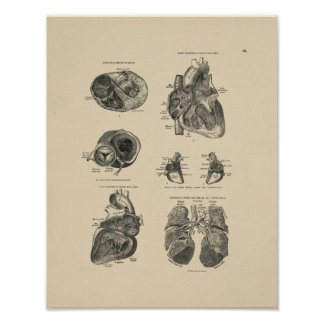 Vintage Heart Lung Anatomy 1880 Print