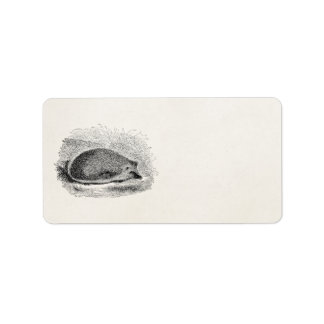 Vintage Hedgehog 1800s Hedgehogs Illustration Address Label