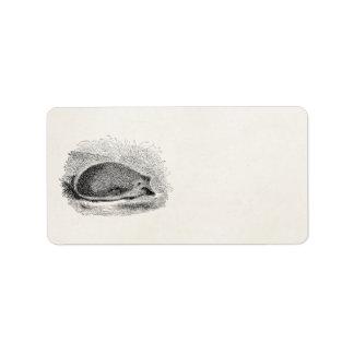 Vintage Hedgehog 1800s Hedgehogs Illustration Label