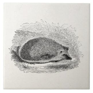 Vintage Hedgehog 1800s Hedgehogs Illustration Tile