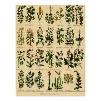 Vintage Herbal Postcard Series - 2