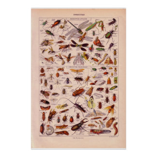 VIntage historic 1920   Insects Poster