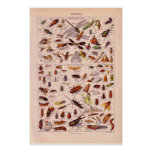 VIntage historic 1920   Insects Posters
