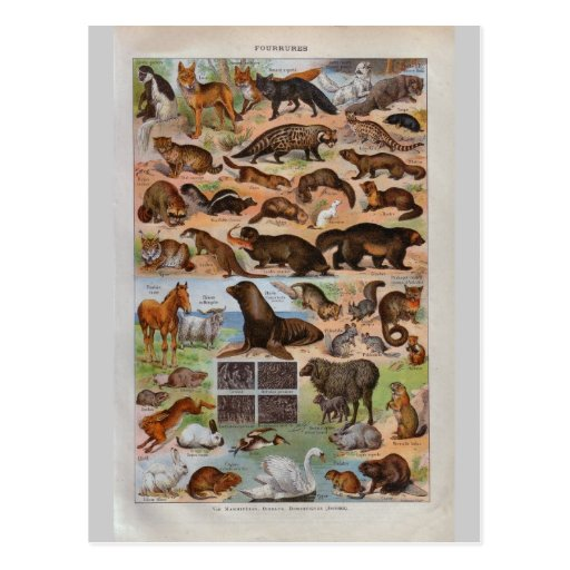 Vintage historic Animals with fur or hair Post Cards