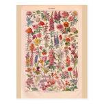 Vintage historic Flowers Postcard