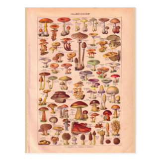 Vintage historic Mushrooms Postcard