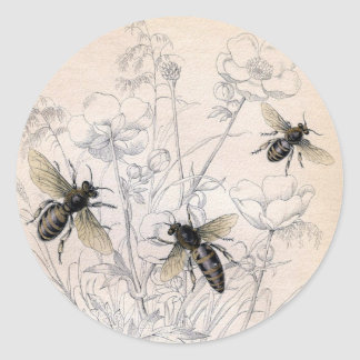 Vintage Honey Bee Art Print Classic Round Sticker