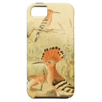 Vintage Hoopoes iPhone 5 Case