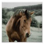 vintage horse animal painting art photo print