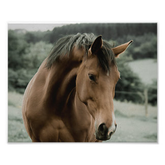 vintage horse animal painting art photograph