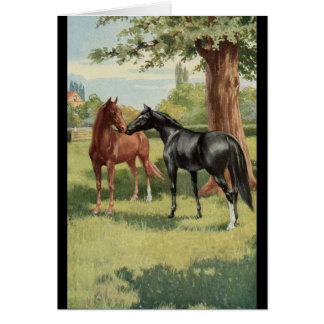 Vintage Horse Mare Stallion Equestrian Cards