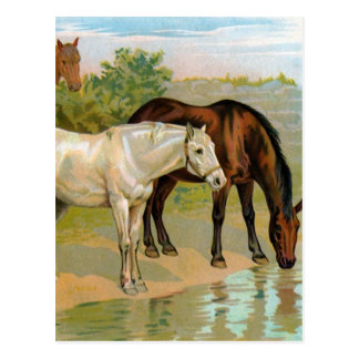 Vintage Horse Painting Post Cards