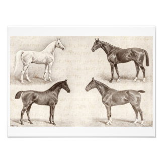 Vintage Horses - Horse and Pony Templates  horse Photo Print