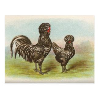 "Vintage ""Houdan Chickens"" Postcard"