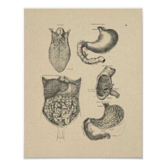 Vintage Human Anatomy 1880 Print
