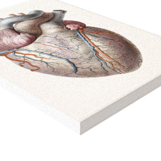 Vintage Human Anatomy Heart Organs Healthy Gallery Wrapped Canvas
