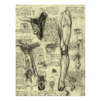 Vintage Human Anatomy Larynx Leg Leonardo da Vinci Postcard