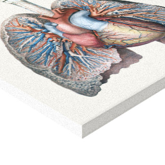 Vintage Human Anatomy Lungs Heart Organs Blood Canvas Print