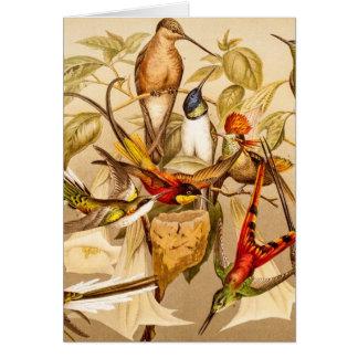 Vintage Hummingbird Bird Hummingbirds Birds Birds Greeting Cards