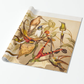 Vintage Hummingbird Bird Hummingbirds Birds  Birds Wrapping Paper