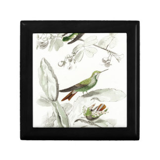 Vintage Hummingbird Illustration - 1800's Birds Gift Box