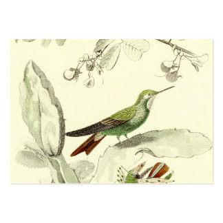 Vintage Hummingbird Illustration - 1800's Birds Pack Of Chubby Business Cards