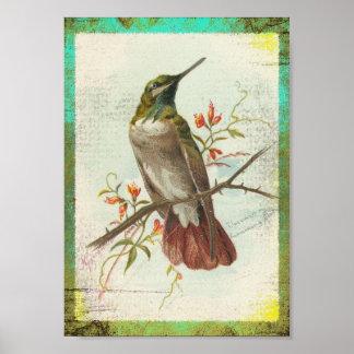 Vintage Hummingbird Poster