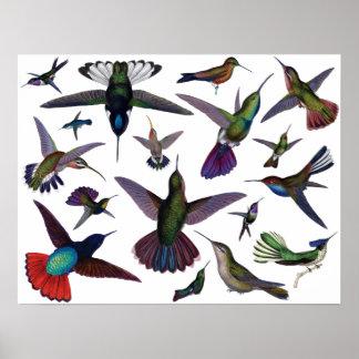Vintage Hummingbirds Poster