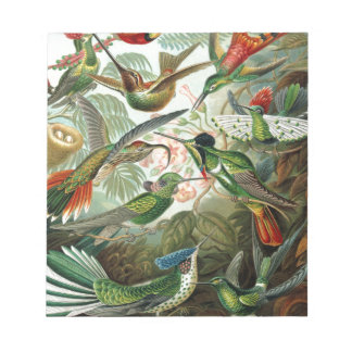 Vintage hummingbirds scientific illustration notepad