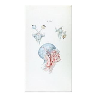 Vintage Illustration Anatomy Human Head and Eyes Canvas Print