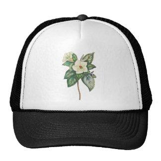Vintage Illustration Of A White Flower Hats