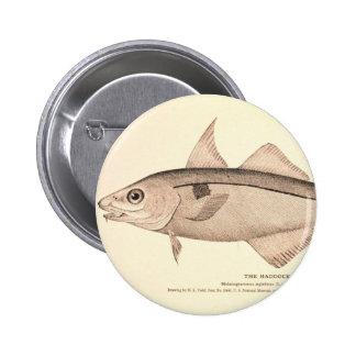 Vintage illustration of Haddock Pinback Buttons