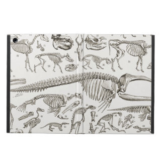 Vintage Illustration of Human & Animal Bones Case For iPad Air