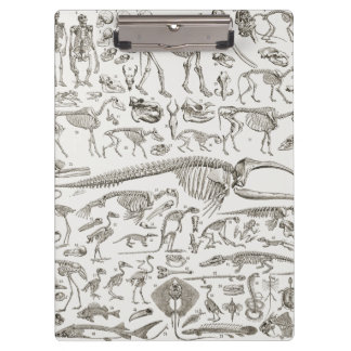 Vintage Illustration of Human & Animal Bones Clipboard