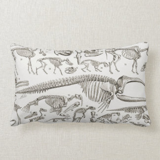 Vintage Illustration of Human & Animal Bones Lumbar Cushion
