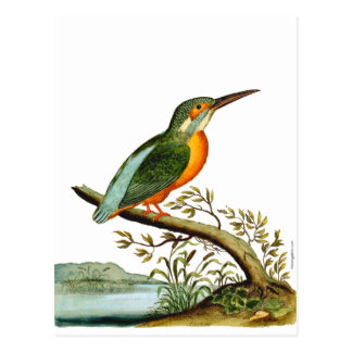 Vintage Illustration of Kingfisher, 1700s Postcard
