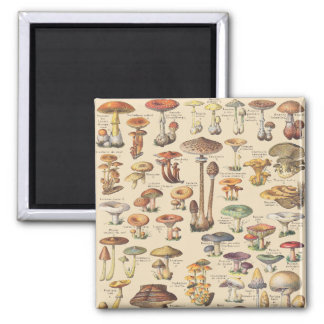 Vintage illustration of mushrooms magnet