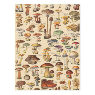 Vintage illustration of mushrooms postcard