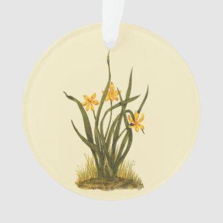 Vintage Illustration of Star Grass