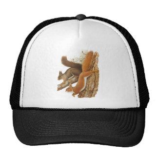 Vintage Illustration, Squirrels In A Tree Trucker Hats