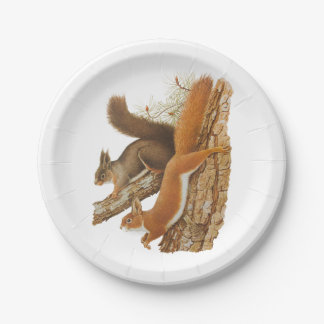 Vintage Illustration, Squirrels In A Tree 7 Inch Paper Plate