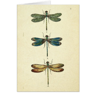 Vintage Illustration, Three Dragonflies Card