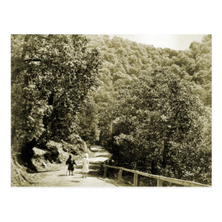 Vintage India, Road to Simla Postcard