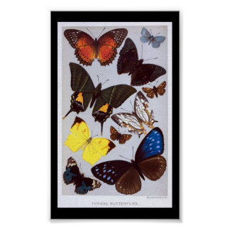 Vintage-Insect-Butterfly-Collection Posters