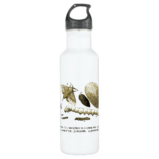 Vintage Insect Image | Silkworm | Moth 710 Ml Water Bottle