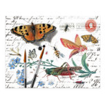 Vintage Insect Letter and postmark
